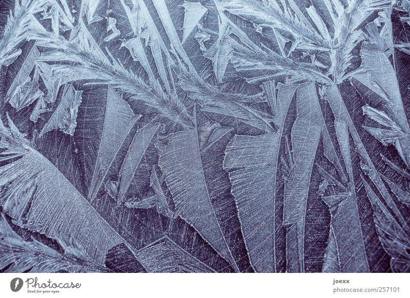 Eisfedern weiß schön Winter schwarz kalt Frost Eisblumen Eiskristall