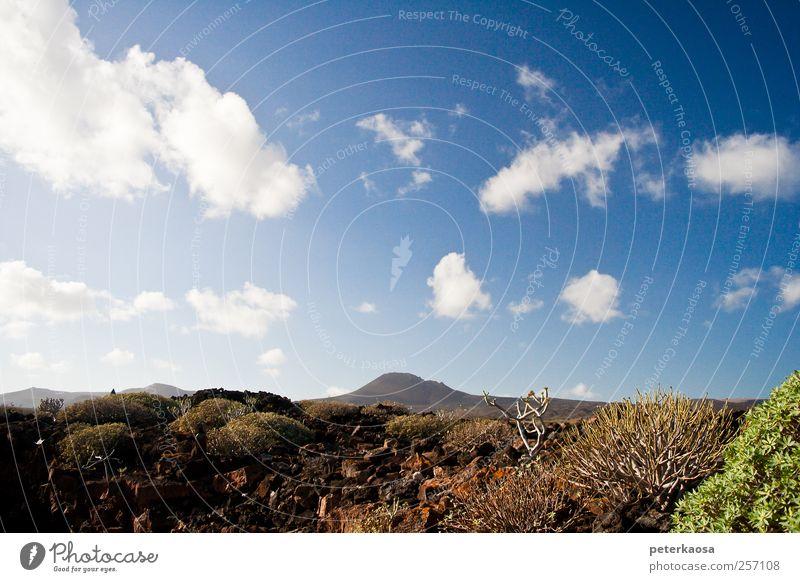 Vulkaninsel Lanzarote Umwelt Natur Landschaft Pflanze Urelemente Erde Himmel Wolken Horizont Sonnenlicht Schönes Wetter Sträucher Hügel Felsen Berge u. Gebirge