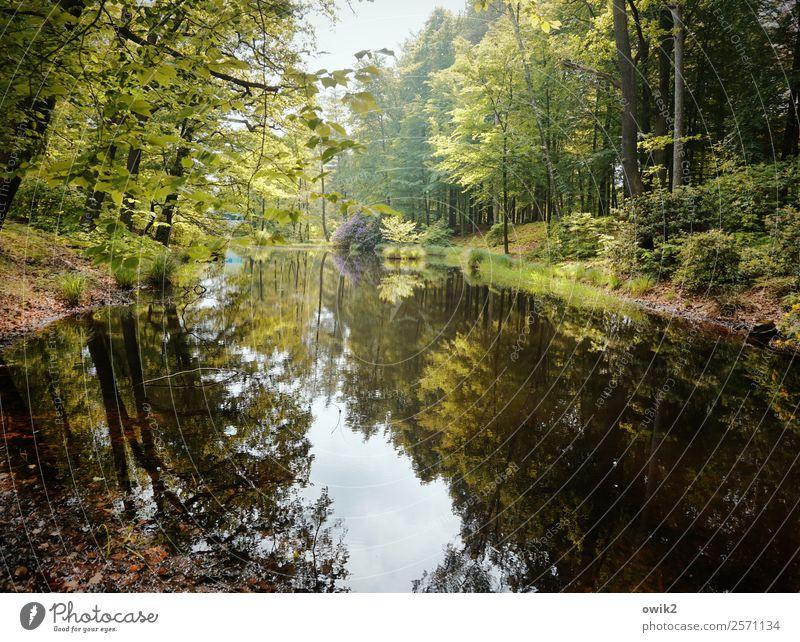 Kromlauer Park, Ostsachsen Umwelt Natur Landschaft Pflanze Wasser Himmel Wolken Frühling Schönes Wetter Baum Gras Sträucher Rhododendron Wald Seeufer Teich