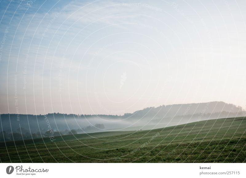 Morgens Umwelt Natur Landschaft Pflanze Himmel Sonnenlicht Herbst Nebel Baum Gras Grünpflanze Wiese Feld Wald frisch kalt grün Morgennebel aufsteigen Farbfoto