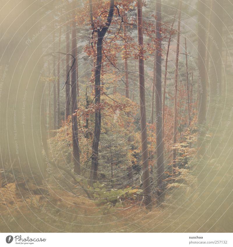 pfälzer wald II Umwelt Natur Herbst Sträucher Farn Wald Holz braun Retro-Farben Bäume Baumstämme Äste Blatt Blätter diffus Märchenwald Gedeckte Farben
