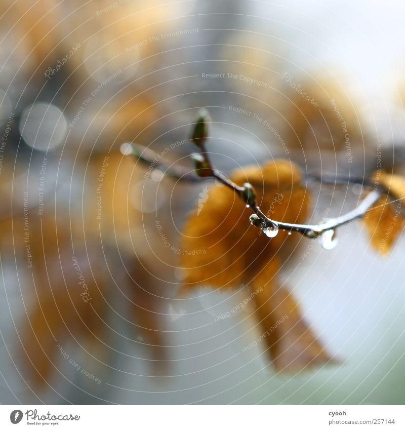 Regen, Regen, Regen... Natur Pflanze Wasser Wassertropfen Herbst schlechtes Wetter Baum Blatt nass blau braun Gedeckte Farben Herbstlaub feucht Traurigkeit