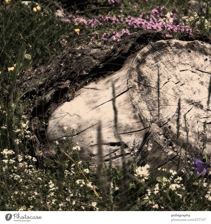 wie die Zeit vergeht... Natur grün Baum Pflanze Sommer Blume Blatt Wiese Leben Gras Frühling Blüte Garten Erde Beginn