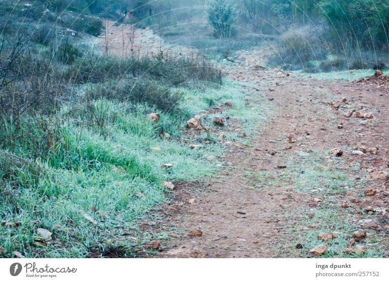 Unterwegs Natur Ferien & Urlaub & Reisen Pflanze Einsamkeit ruhig Ferne Umwelt Landschaft Berge u. Gebirge Freiheit Gras Wege & Pfade Stimmung Erde Nebel