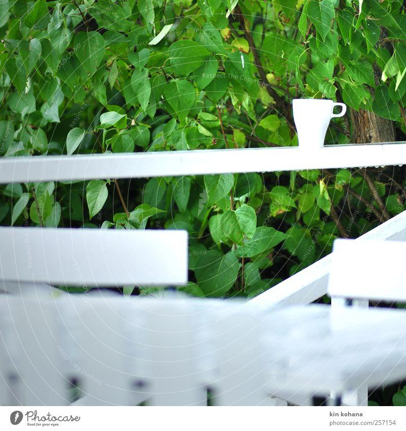 pause. Ernährung Frühstück Getränk Heißgetränk Kaffee Tasse harmonisch Erholung ruhig Garten Terrasse Pflanze Baum Sträucher Grünpflanze Park grün weiß Pause