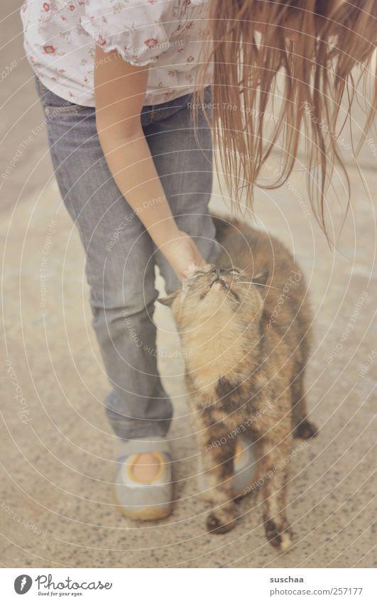 miez miez ... Kind Mädchen Kindheit Kopf Haare & Frisuren Arme Beine Fuß 1 Mensch 3-8 Jahre Tier Haustier Katze Tierliebe Kontakt Jeanshose Streicheln sanft