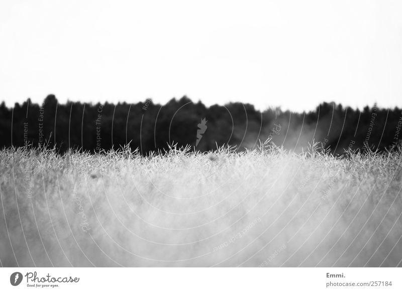 vom fliegen Natur Landschaft Getreide Feld Wald einfach nachhaltig natürlich ruhig rein Schwarzweißfoto Außenaufnahme Menschenleer Textfreiraum oben