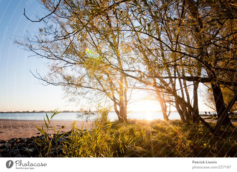 Sonnige Aussichten Umwelt Natur Landschaft Pflanze Urelemente Luft Wasser Sonne Sonnenaufgang Sonnenuntergang Sonnenlicht Klima Wetter Schönes Wetter Baum Wald