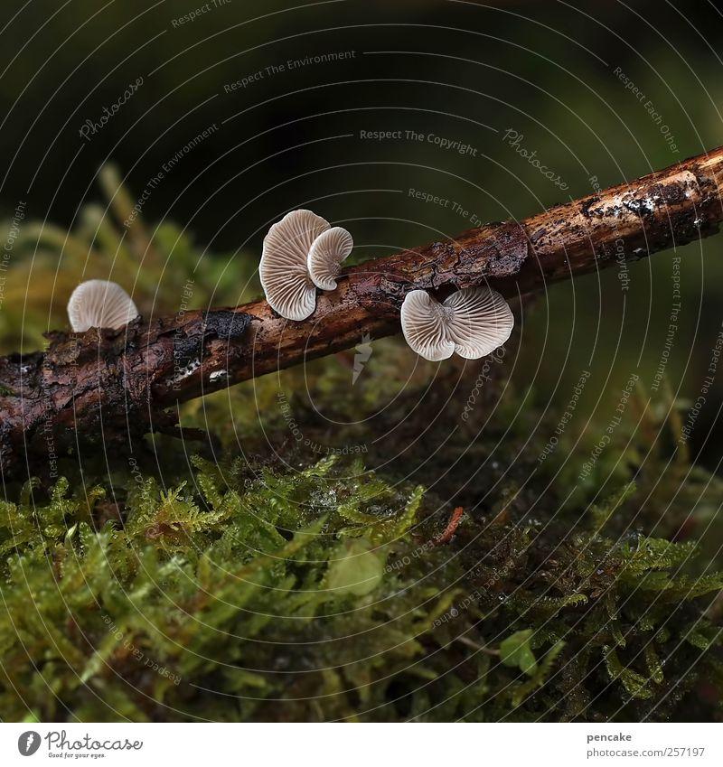die kleinen dinge sind's Natur Pflanze Tier Erde Wassertropfen Regen Moos Pilz Baumpilze Milder Zwergknäueling schön Ast Tauwetter Makroaufnahme