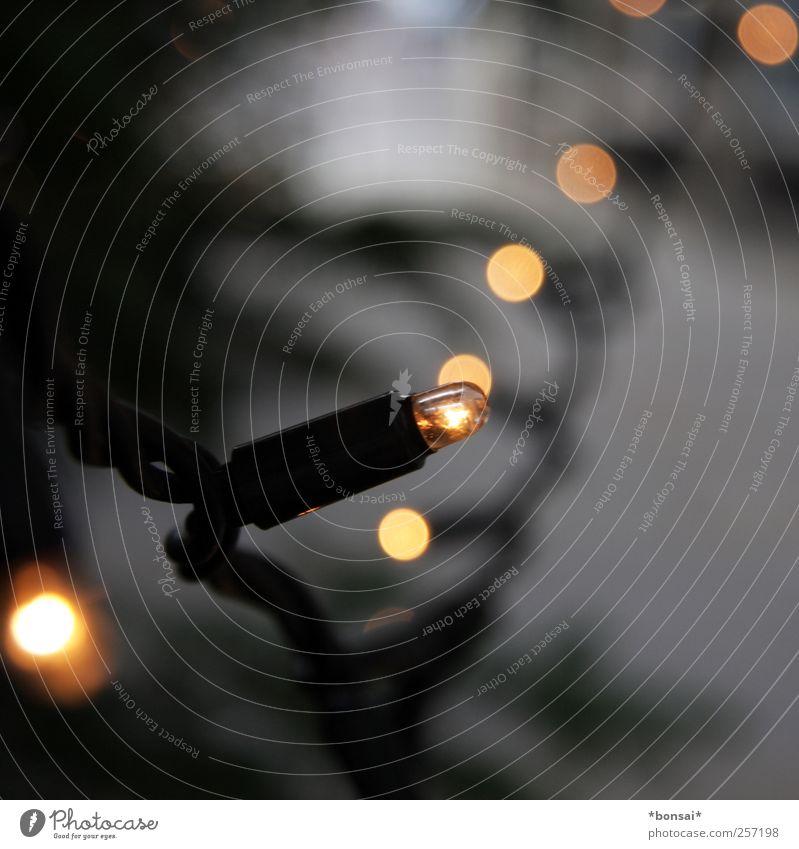 frohes fest euch allen! Dekoration & Verzierung Kabel Baum Tanne glänzend hängen leuchten klein nah Stimmung Vorfreude Design Energie Tradition Wunsch