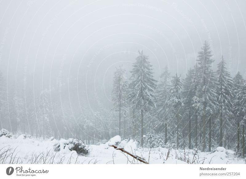 Allen ein besinnliches Fest Pflanze Baum ruhig Landschaft Winter Wald kalt Berge u. Gebirge Schnee Stimmung Eis Nebel Klima trist Wachstum Frost