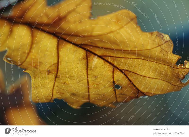 The Last Umwelt Natur Pflanze Herbst schlechtes Wetter Baum Blatt Grünpflanze Wildpflanze alt trocken Wärme blau mehrfarbig gelb gold Farbfoto Außenaufnahme