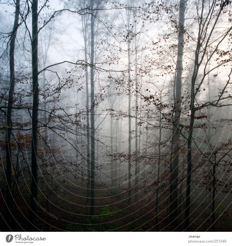 Deep in the Woods Natur Wald dunkel Umwelt Gefühle Stimmung Angst Nebel bedrohlich Urelemente mystisch Surrealismus Umweltschutz Klimawandel