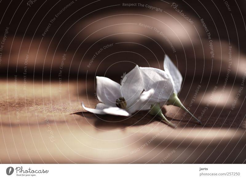 memory Pflanze ruhig Blüte natürlich Hoffnung einfach Frieden Gelassenheit Duft