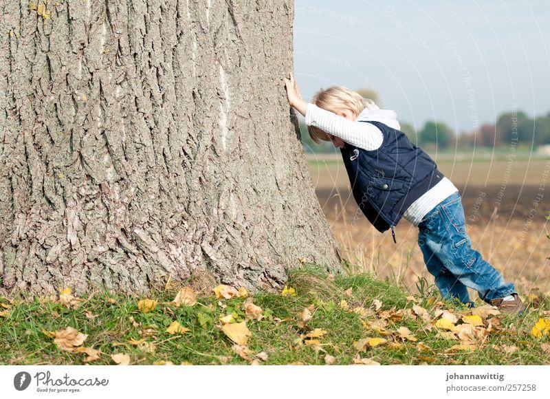 ganz schön schwer. Mensch Kind Natur Baum Blatt Herbst Spielen Junge klein Kindheit Kraft blond maskulin groß Fröhlichkeit Kleinkind