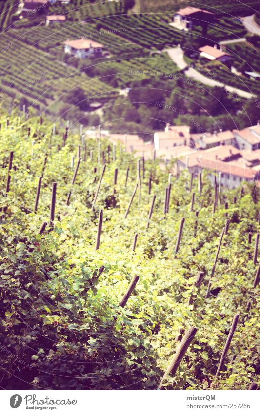 Traubenblut. Kunst ästhetisch Wein Weinberg Weintrauben Weinlese Weinbau Weingut Italien Dorf Bergdorf Einsamkeit Landwirtschaft Berghang Tradition Region