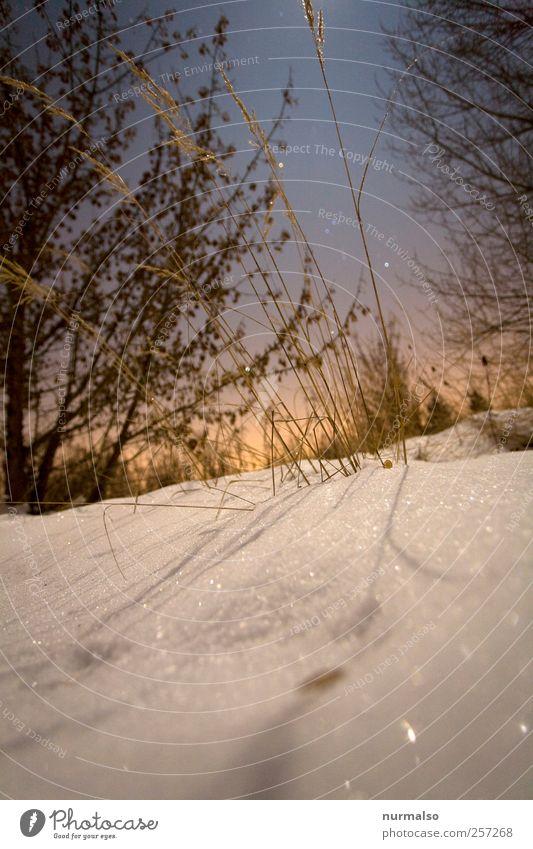 vorbei Stil Freizeit & Hobby Garten Natur Landschaft Nachthimmel Stern Winter Klima Wetter Eis Frost Schnee Sträucher frieren glänzend genießen träumen kalt