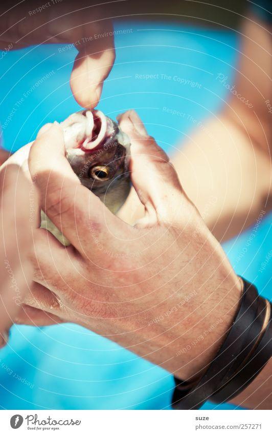 Fischers Fritzen Freizeit & Hobby Angeln Hand Finger Tier Wildtier festhalten blau Angler Angelschnur Fischereiwirtschaft Fischmaul befreien Farbfoto mehrfarbig