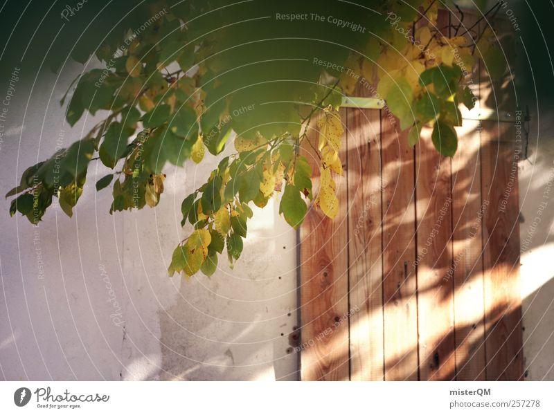 Schuppentür. Garten Tür Gartenhaus Scheune verwildert Holztür geheimnisvoll Gartentor verstecken Herbst grün Herbstfärbung Lichtspiel Farbfoto Gedeckte Farben