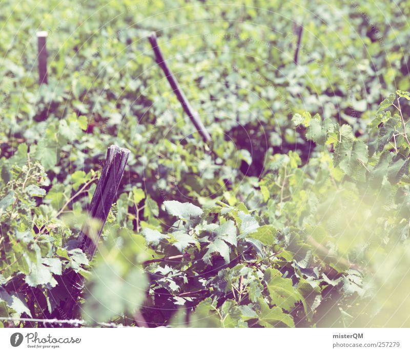 Rebenfest. Pflanze Umwelt Landschaft ästhetisch Klima Wein Landwirtschaft Schönes Wetter Berghang Weintrauben Weinberg Weinlese Weinbau Weingut