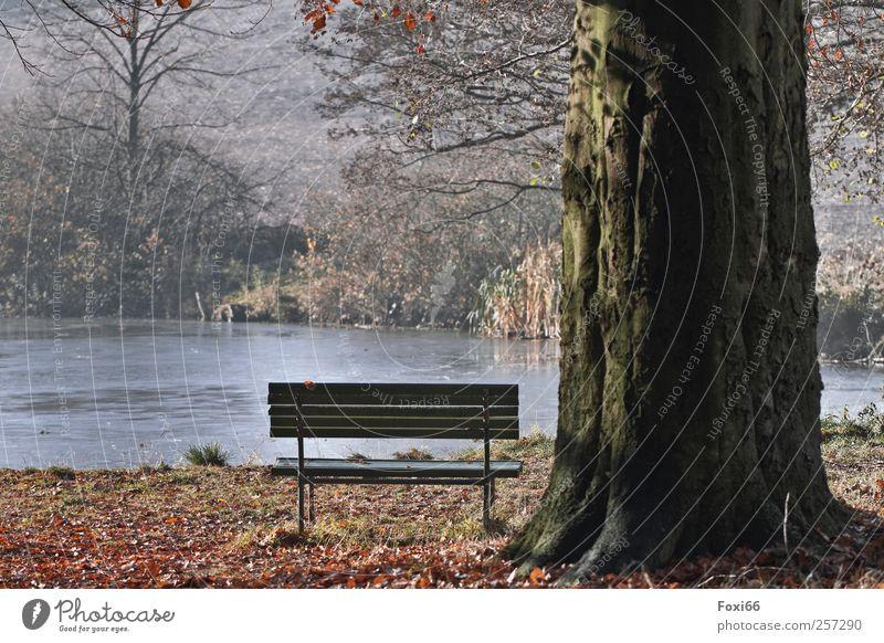 Einsames Plätzchen Natur blau Wasser grün Baum Sonne ruhig Einsamkeit Erholung Herbst Holz Bewegung Park gold Ausflug Sträucher