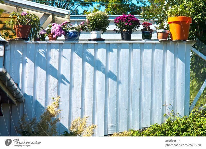 Blumentöpfe Sommer weiß Sonne Blüte Textfreiraum Häusliches Leben Wohnung Blühend Geländer Balkon Terrasse Verschiedenheit Vase Vielfältig Blumentopf