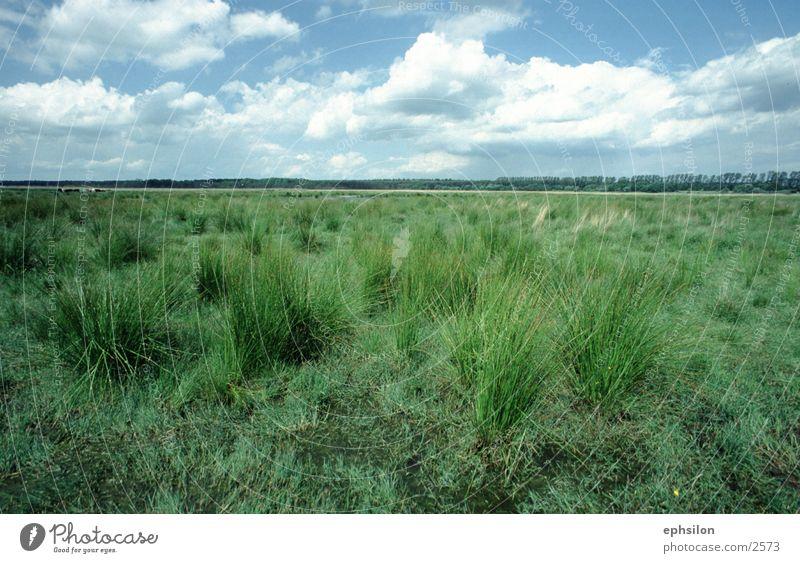 Wiese Gras Natur