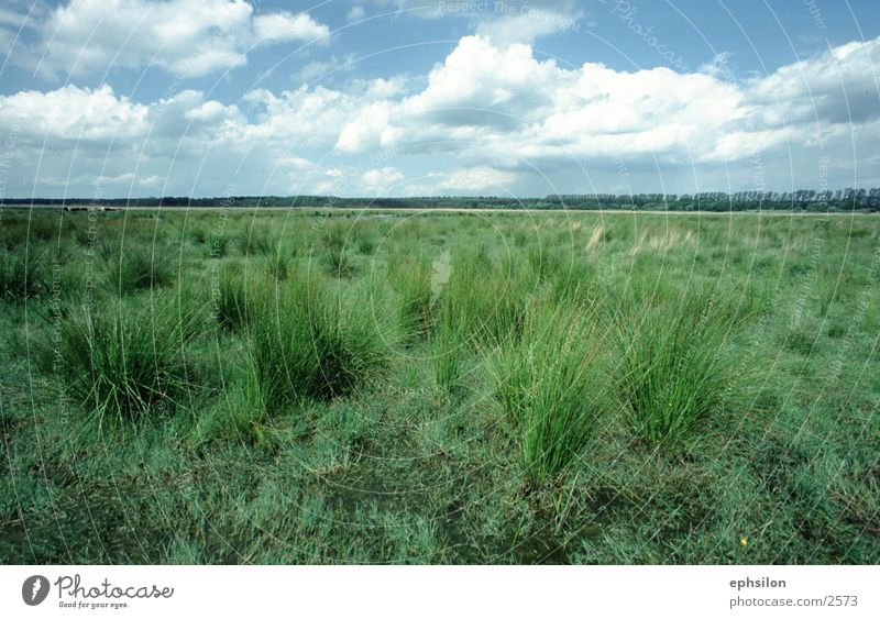 Wiese Natur Wiese Gras