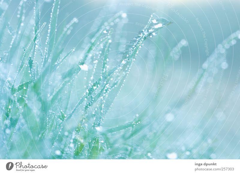 Morgentau Umwelt Natur Landschaft Pflanze Urelemente Wasser Wassertropfen Frühling Klima Schönes Wetter schlechtes Wetter Nebel Gras Grünpflanze Wildpflanze