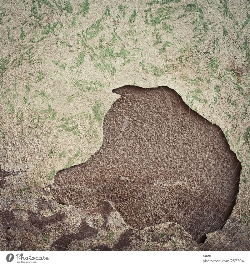 Schweinskopf alt Wand Mauer lustig Kunst Kopf Fassade dreckig authentisch kaputt Vergänglichkeit verfallen Verfall schäbig Putz abblättern