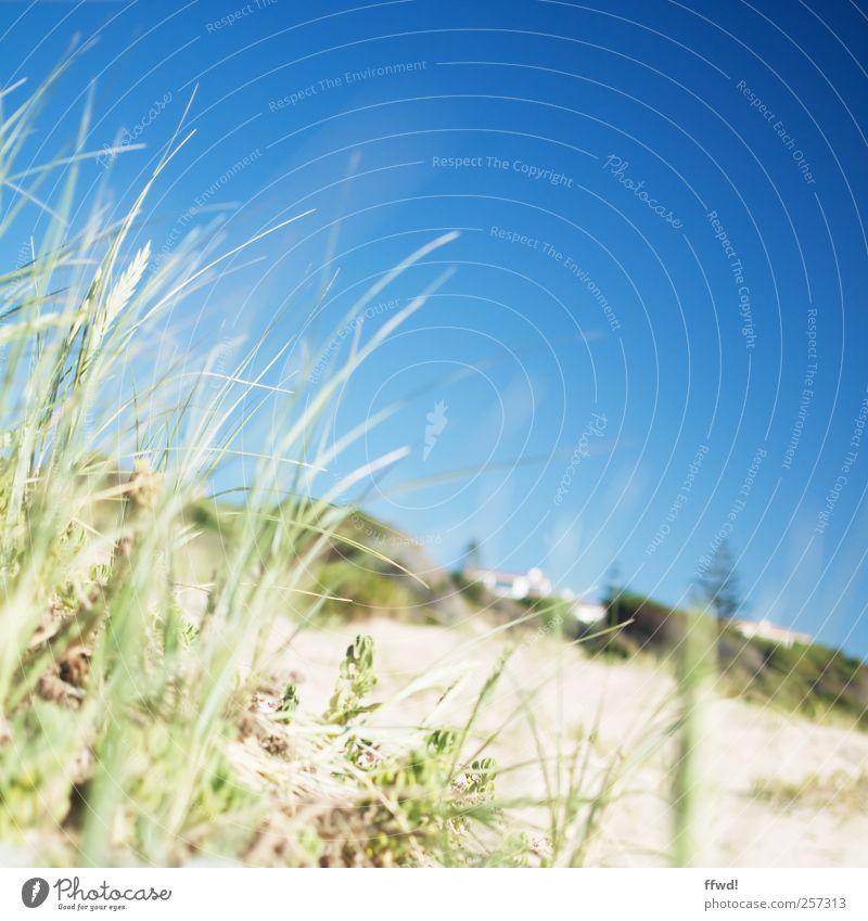 Plett Himmel Natur Pflanze Ferien & Urlaub & Reisen Sommer Strand ruhig Haus Erholung Landschaft Gras Sand Küste Frühling natürlich frisch