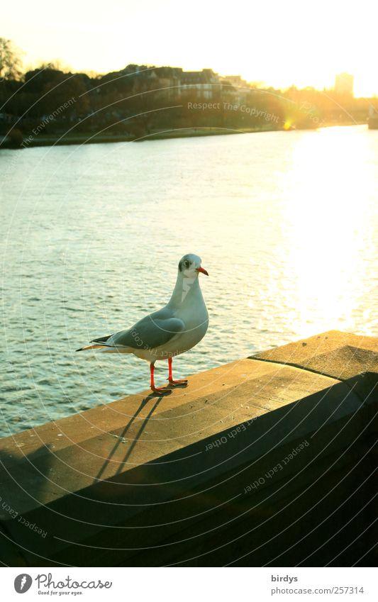 Möwe Sightseeing Städtereise Wasser Sonne Sonnenlicht Herbst Schönes Wetter Flussufer Brückengeländer Wildtier Vogel 1 Tier beobachten Blick stehen ästhetisch