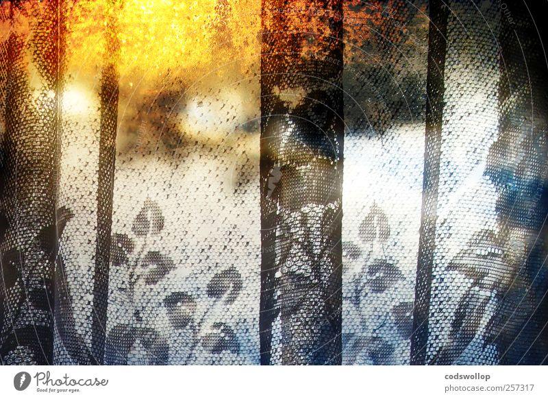 snowy sunset Fenster ästhetisch außergewöhnlich kalt Wärme gelb schwarz weiß Idylle Gardine Winter Blatt Farbfoto mehrfarbig Innenaufnahme Experiment abstrakt