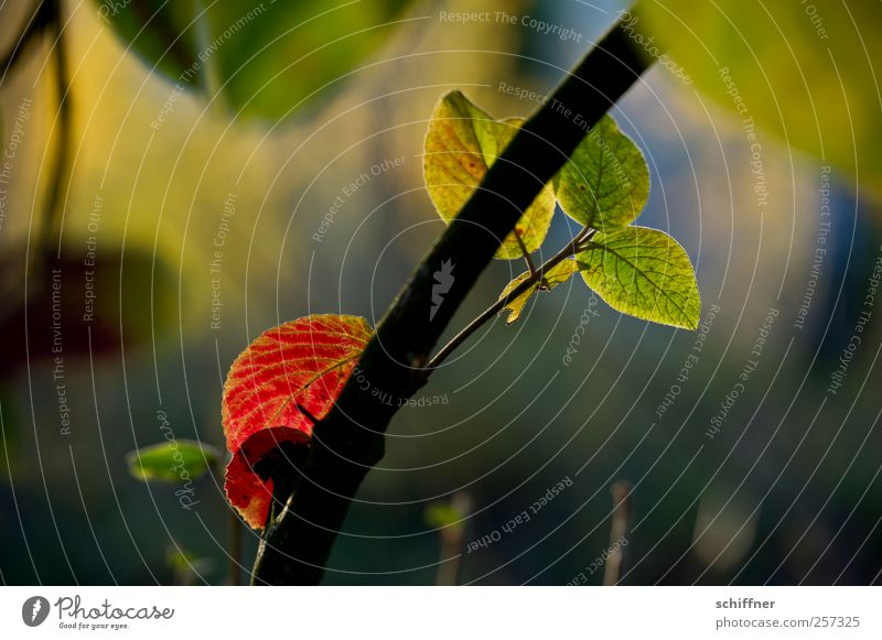Damals... Natur grün Baum rot Pflanze Blatt Herbst Garten Traurigkeit Park Schönes Wetter Baumstamm Zweig Herbstlaub herbstlich Herbstfärbung