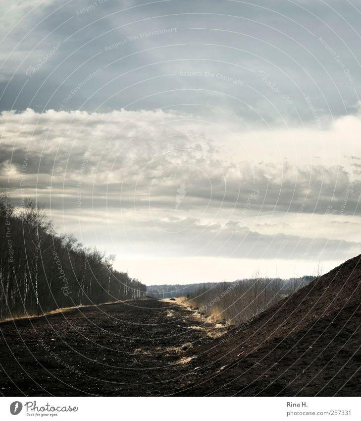 Zwischen Himmel und Erde Natur Winter Einsamkeit Herbst dunkel Umwelt Landschaft Gefühle natürlich Klima Sumpf Moor Schleswig-Holstein Torf