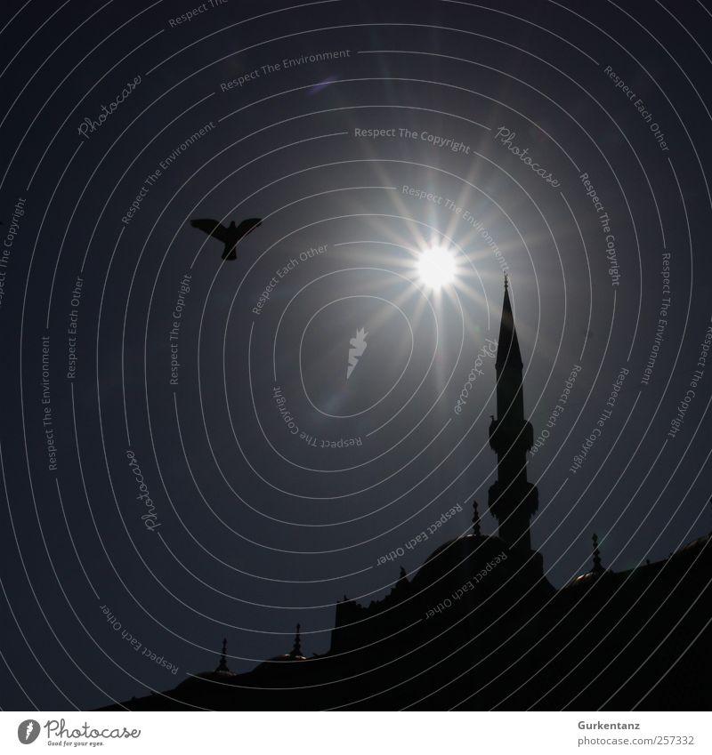 Betende Taube Vogel 1 Tier Glaube demütig Istanbul Türkei Islam Minarett Moschee Galata-Brücke Religion & Glaube Sonnenlicht Turm Moslem Silhouette