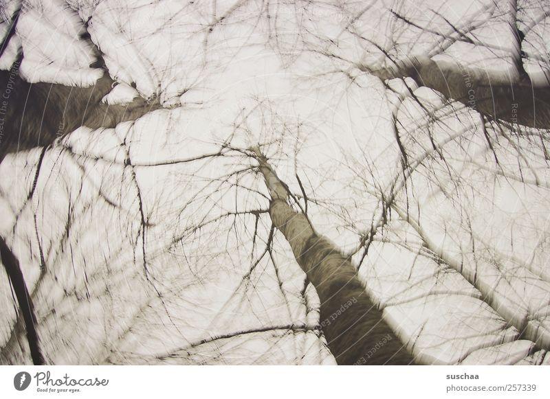 ich starre nach oben ... Himmel Natur Baum Winter Einsamkeit Wald dunkel Umwelt grau Holz Bewegung Traurigkeit träumen Klima Trauer