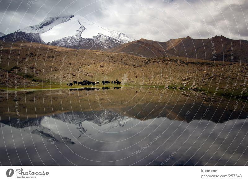 Natur Wasser schön Ferien & Urlaub & Reisen Tier Umwelt Landschaft Gefühle Berge u. Gebirge Stimmung Abenteuer Wildtier Alpen Gipfel Seeufer Unwetter