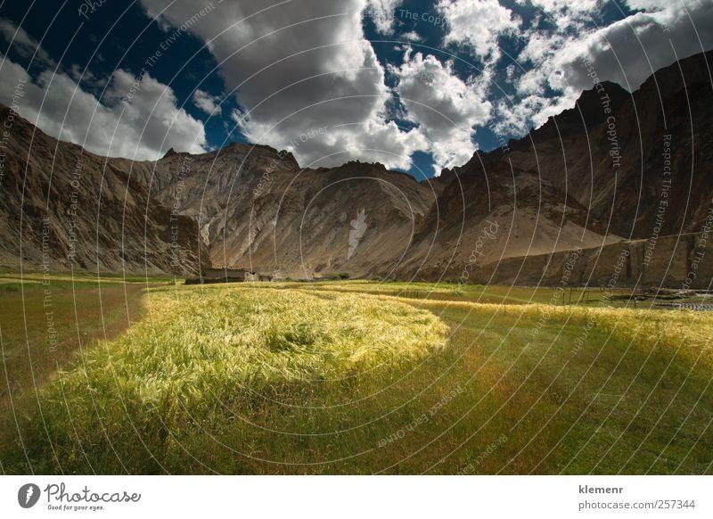 Weizengelagerte Landschaft im Marhka-Tal, Leh Indien Tourismus Ausflug Abenteuer Sightseeing Berge u. Gebirge Umwelt Natur Pflanze Wolkenloser Himmel Felsen