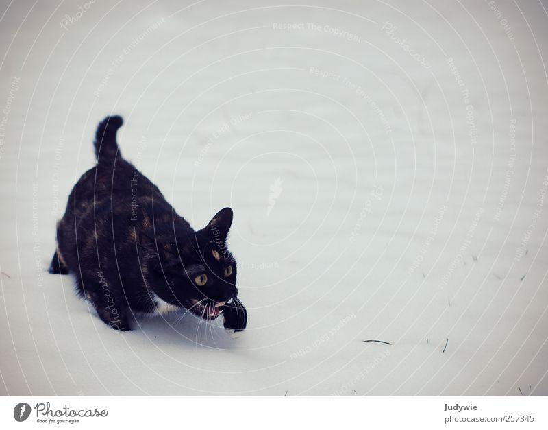 Wer holt mich hier weg?! Natur weiß Katze schwarz Tier kalt Schnee Umwelt Gefühle Schneefall Eis Angst gehen elegant Frost Tiergesicht