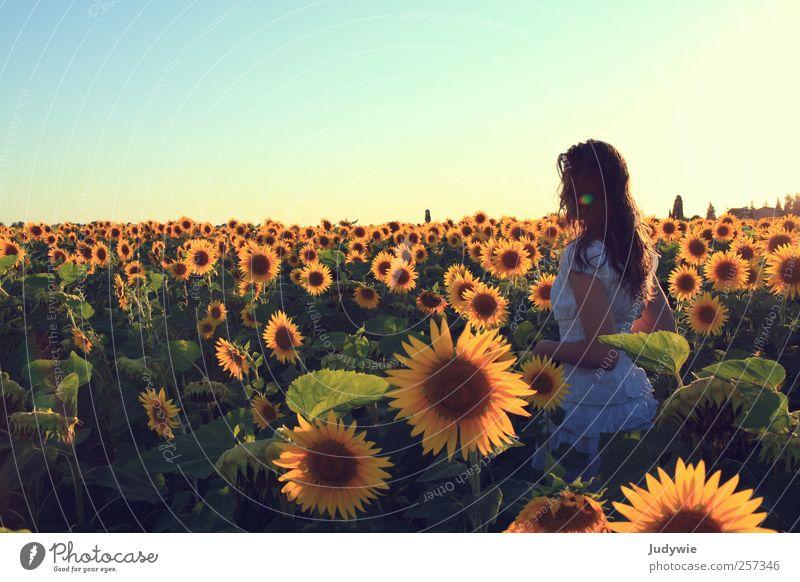 Sommer pur Mensch Kind Natur Jugendliche schön Ferien & Urlaub & Reisen Sonne Blume ruhig gelb Erholung feminin Freiheit Glück Stimmung