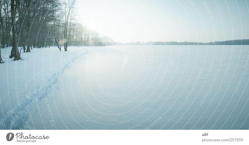 Spuren im Schnee Umwelt Sonne Sonnenlicht Winter Wetter Schönes Wetter Seeufer kalt natürlich blau Farbfoto Gedeckte Farben Außenaufnahme Menschenleer