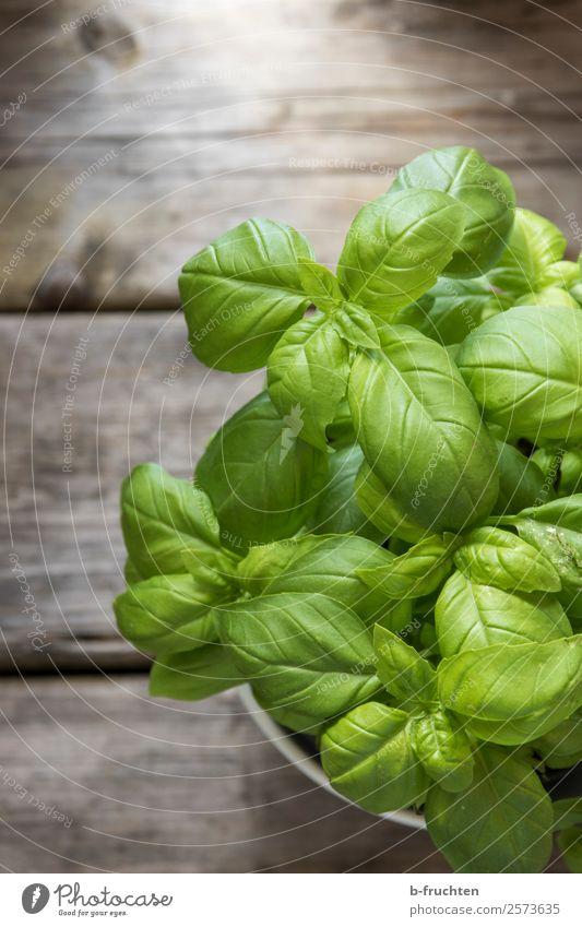 Basilikum im Topf Lebensmittel Kräuter & Gewürze Bioprodukte Vegetarische Ernährung Gesunde Ernährung Nutzpflanze Garten Holz Essen frisch Gesundheit natürlich