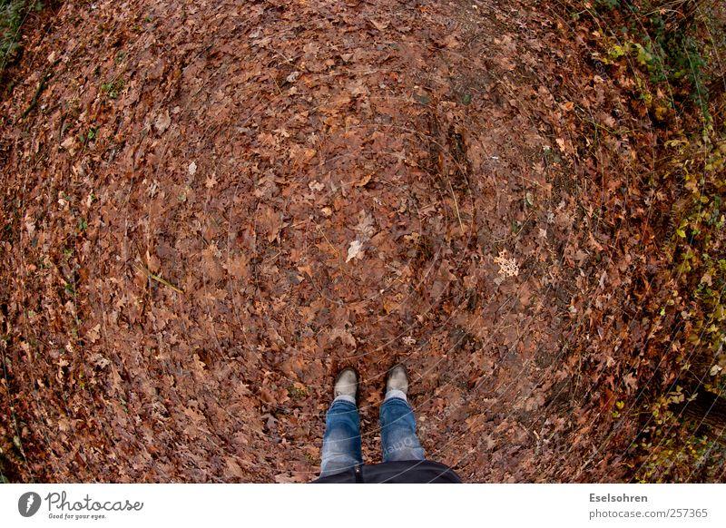 Spaziergang Mensch Beine Fuß 1 Natur Erde Herbst Wetter schlechtes Wetter Hose Mantel Stiefel Erholung gehen braun rot Blatt Fischauge Farbfoto Außenaufnahme