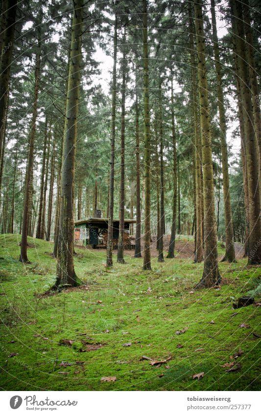 Wald vs. Beton feat. Graffiti Natur Pflanze Baum Gras Moos Haus Hütte Holz grün Brennholz Blatt Moosteppich Farbfoto Außenaufnahme Menschenleer Tag