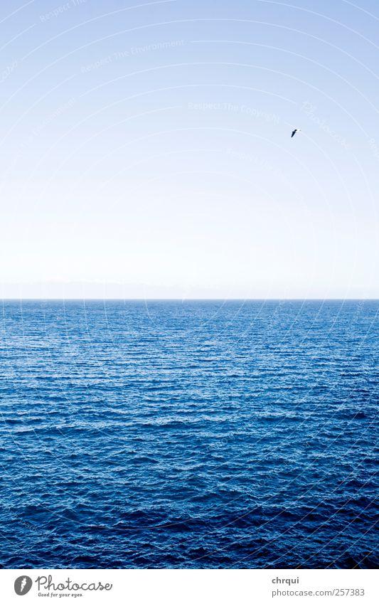 Blue ocean with bird Umwelt Landschaft Luft Wasser Erde Himmel Wolkenloser Himmel Horizont Sommer Schönes Wetter Wellen Küste Seeufer Meer atmen Erholung