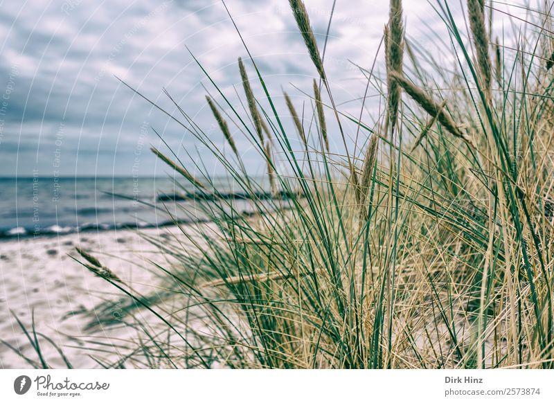 Badestrand bei Marstal / Dänemark Ferien & Urlaub & Reisen Sommer Pflanze Landschaft Meer Wolken Strand Ferne Umwelt natürlich Gras Tourismus Freiheit Sand
