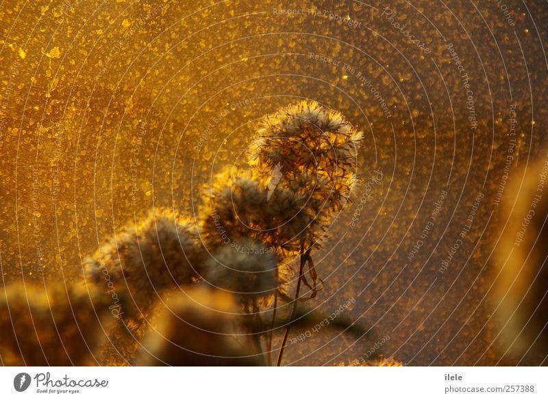 jedem anfang... Stil Design Glück Duft Sommer Sonne Natur Sonnenaufgang Sonnenuntergang Herbst Wetter Schönes Wetter Sträucher Blüte alt atmen Blühend Erholung