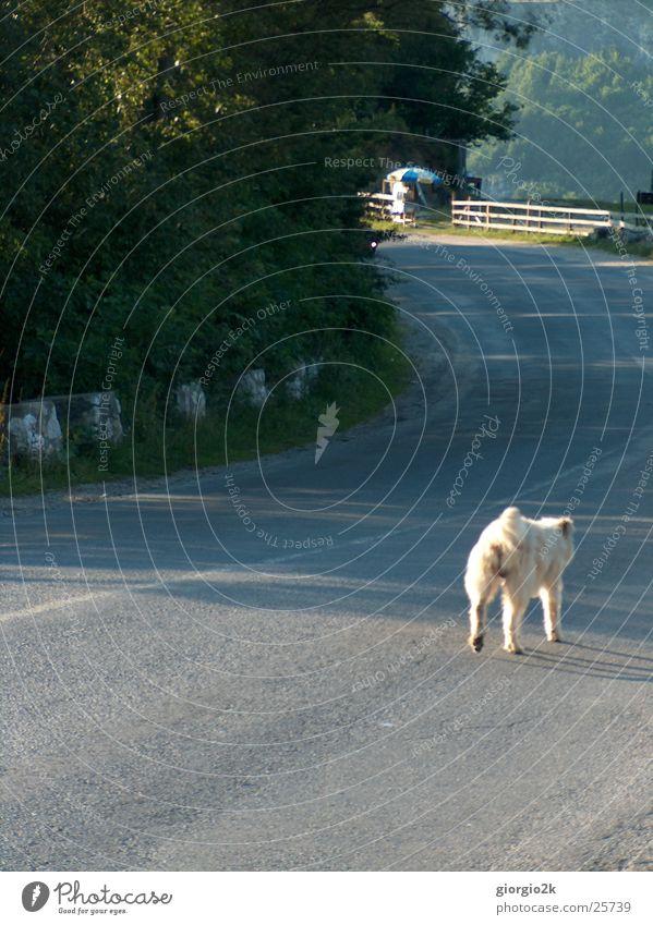 long road... Hund Baum Rumänien Karpaten Einsamkeit Wege & Pfade Straße Schatten Wildtier Sonne Straßenhund