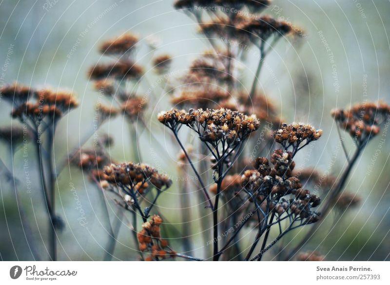 ... Natur Herbst kalt Umwelt Gras Sträucher Sehnsucht schlechtes Wetter dehydrieren
